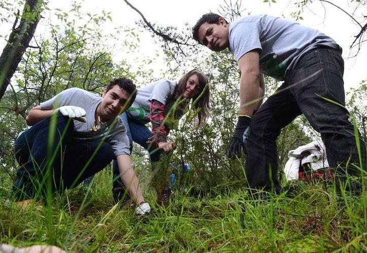 El 5 de junio se celebra el Día Mundial del Medio Ambiente. (Archivo/Notimex)