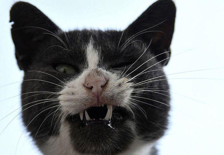 Un gato es el principal sospechoso del intento de un asesinato a una anciana. (globallookpress.com).