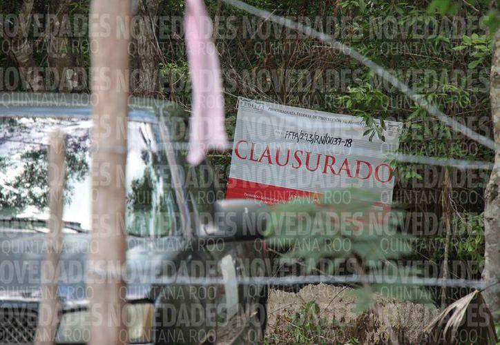 Por fin la Profepa decidió clausurar los trabajos de la apertura de caminos en los manglares cercanos a Palancar, luego de un mes y de la intervención del gobernador de Quintana Roo. (Gustavo Villegas/SIPSE)