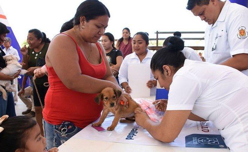Se solicita a las personas a cargo de perros y gatos estar pendientes de esta campaña. (Novedades Yucatán)