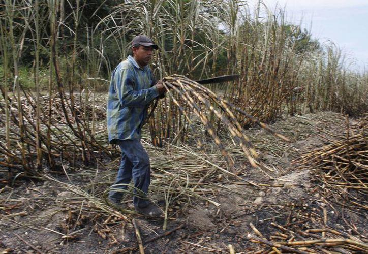 Autoridades ambientales previenen inoculación en los pozos de estas comunidades. (Harold Alcocer/SIPSE)