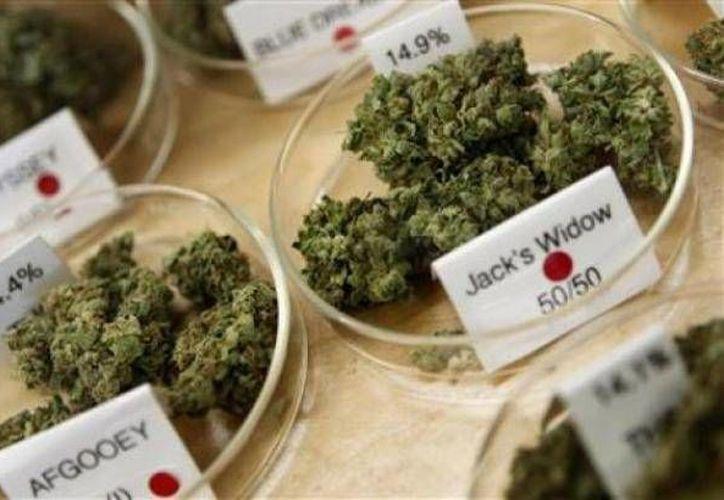 Si bien hay señales alentadores del uso del cannabis, los investigadores advierten que los  pacientes no deben usar la marihuana para automedicarse. (Archivo/Reuters)