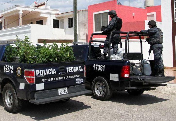 Elementos de la Policía Federal transportan las plantas que fueron decomisadas. (Amílcar Rodríguez)