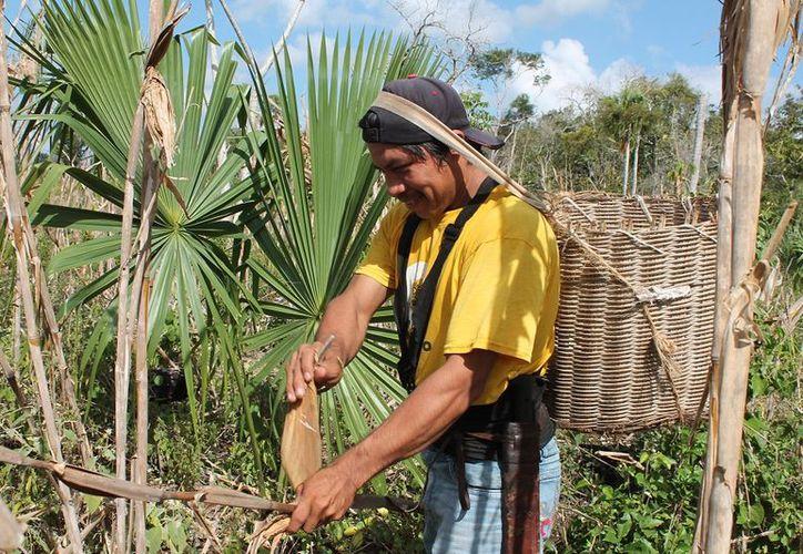 La Procuraduría Agraria en Quintana Roo trabaja para que los ejidatarios reciban la indemnización correspondiente.