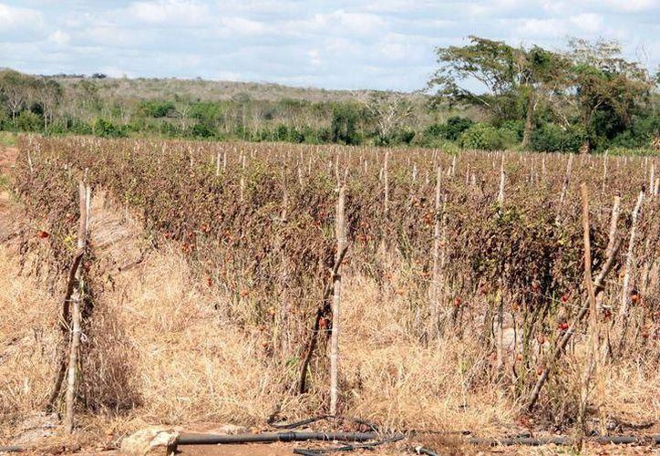 Gobierno prepara $100 millones para enfrentar la sequía. (Archivo/SIPSE)