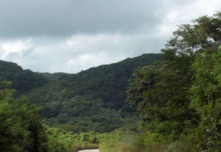 La reserva de los montes altos se desarrolla en el sur y oriente del Estado. (SIPSE)