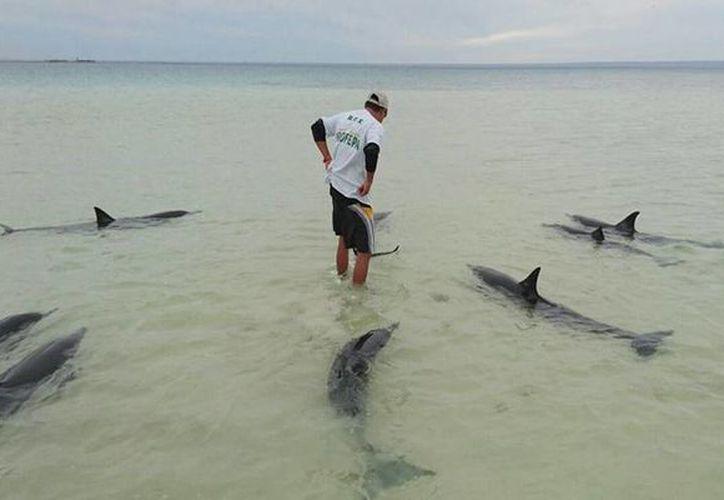 Inspectores de la Profepa, en Baja California Sur, salvó a nueve de 10 ejemplares varados en playa El Tesoro, en el municipio de La Paz. (profepa.gob.mx)