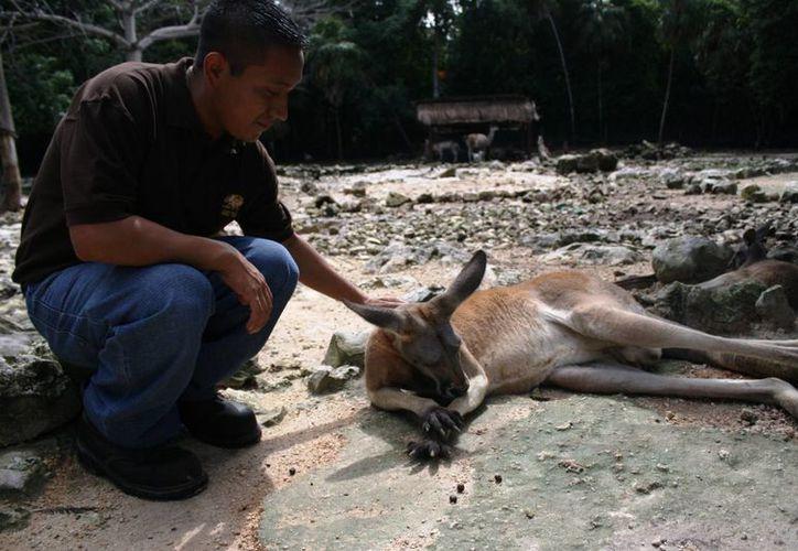 Del 20 al 24 de octubre se lleva a cabo el  XXXII Congreso de la Asociación de Zoológicos y Acuarios de  México. (Octavio Martínez/SIPSE)
