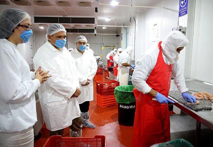 Imagen del Gobernador de Yucatán mientras observa el procesamiento de las carnes en Marlet. (Milenio Novedades)