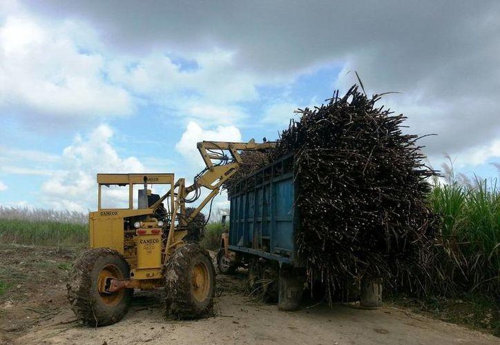 Durante los meses de enero y abril, la industria y los productores han tratado de recuperar el volumen que se encuentra rezagado. (Edgardo Rodríguez/SIPSE)