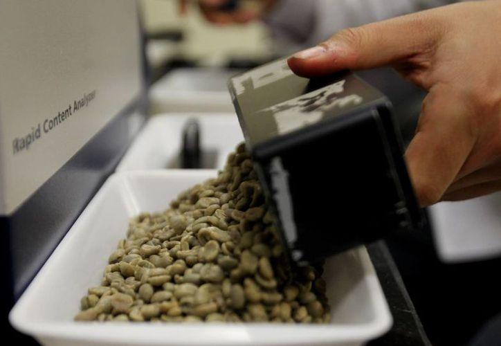"""Un operario manipula muestras de café para su análisis en el """"Espectroscopio Infrarrojo Cercano"""" con el que se obtiene una huella dactilar del grano. (EFE)"""