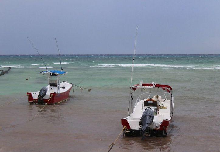 La presencia del sargazo dejó imagen negativa a las playas. (Adrián Barreto/SIPSE)
