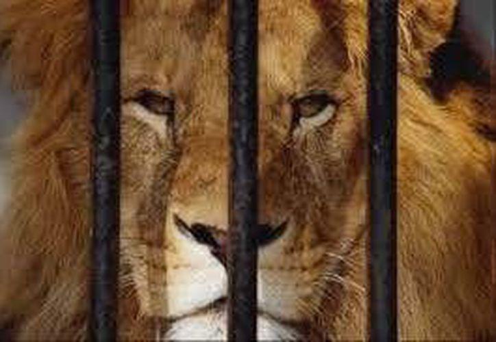 Hoy será presentada la iniciativa de ley que pretende evitar el uso de animales en espectáculos en el estado. (Foto de Contexto/Internet)