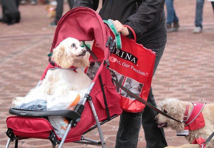 Se ha reportado que los delincuentes piden hasta 10 mil pesos por la mascota secuestrada, la cual no entregan una vez cobrado el rescate. (Notimex)