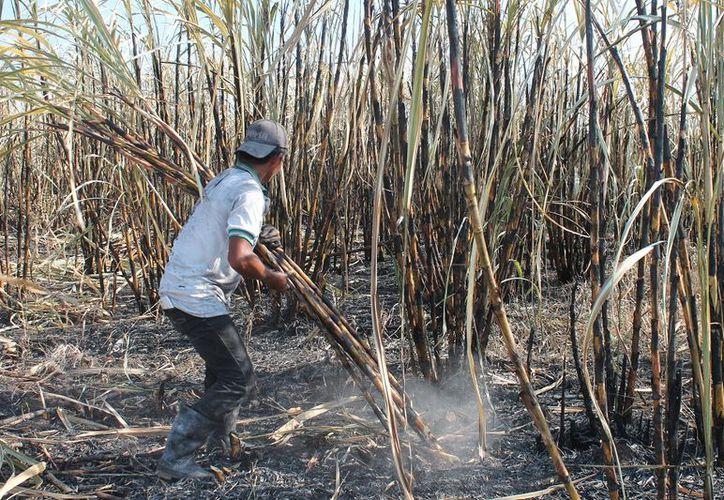 La restricción que aplican las autoridades a las quemas agrícolas es para prevenir que deriven en incendios forestales.