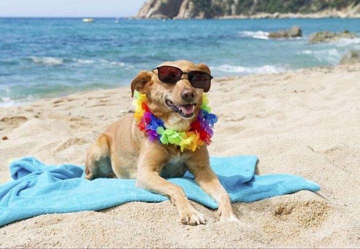 En algunos perros este estrés se manifiesta diferente. (Contexto/ Internet)