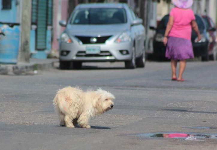 Los veterinarios de World Vets realizarán una jornada de esterilización gratuita en Cozumel. (Gustavo Villegas/SIPSE)