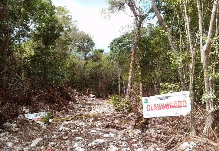 Las obras de desmonte en dos predios en la carretera Tulum-Cobá, fueron clausuradas por devastar especies nativas.  (Rossy López/SIPSE)