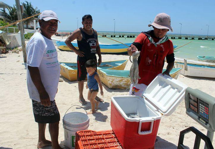 La temporada de pulpo registra altibajos en la costa yucateca. (Foto: Milenio Novedades)