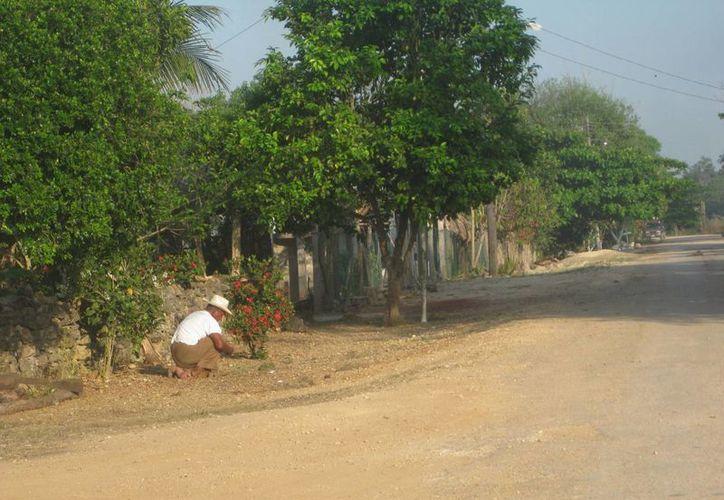 Tras las lluvias del año pasado los caminos y carreteras de las comunidades indígenas quedaron dañadas. (Javier Ortiz/ SIPSE)