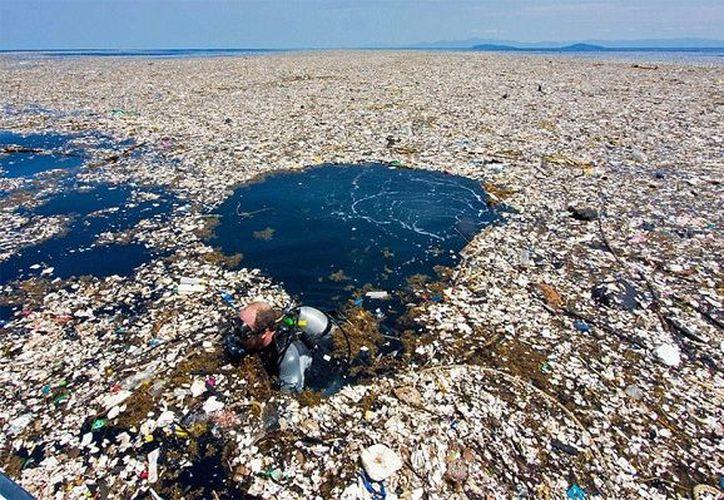 El mensaje hará conciencia de que el plástico ha generado la muerte de hasta un millón de aves y cerca de 100 mil mamíferos marinos de 600 especies. (Foto: Nuestromar).