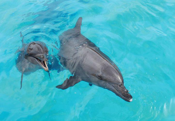 El director de la empresa Delphinus está preocupado por el bienestar de los animales. (Luis Soto/SIPSE)