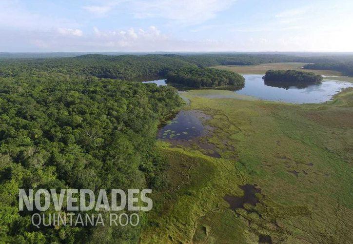 La laguna prácticamente ya tapó los tres socavones que se abrieron hace aproximadamente 12 días. (Foto: Joel Zamora/SIPSE)