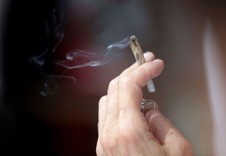 Uruguay sería el segundo país sudamericano, después de Bolivia, en legalizar una droga. (EFE)