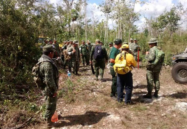 Conafor opera el programa de incendios forestales con 18 mil combatientes, estos se conforman por personal oficial, gobiernos estatales, municipales y la participación de los ejidatarios.  (Foto: Juan Rodríguez  / SIPSE)