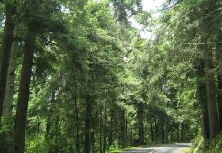 Las hojas verdes de las plantas reflejan mejor la luz solar que el asfalto. (Foto de contexto)
