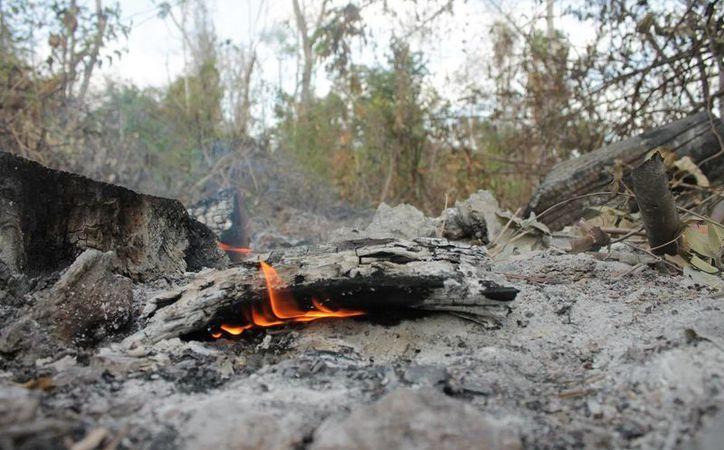 Los incendios que devoraron las áreas verdes en 2016, en el país, fue provocado por una fuerte sequía que afectó a mil 135 municipios.