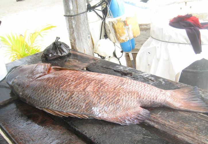 Inspeccionan establecimientos que expenden pescados y mariscos. (Lanrry Parra/SIPSE)