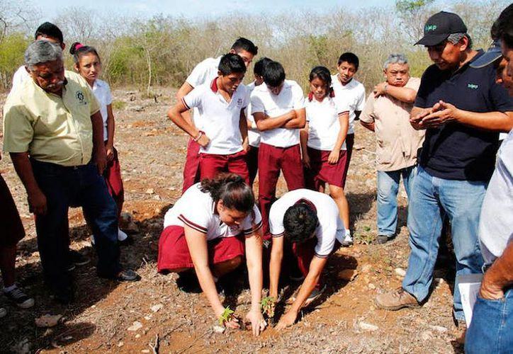 Alumnos de dos secundarias de Yucatán fabricarán mermeladas de papaya. El proyecto incluye la siembra, cosecha y transformación del producto. (Cortesía)