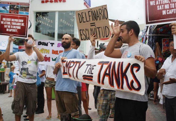Los manifestantes llevaban pancartas con leyendas, en inglés y español, donde exigían la liberación de los delfines. (Octavio Martínez/SIPSE)