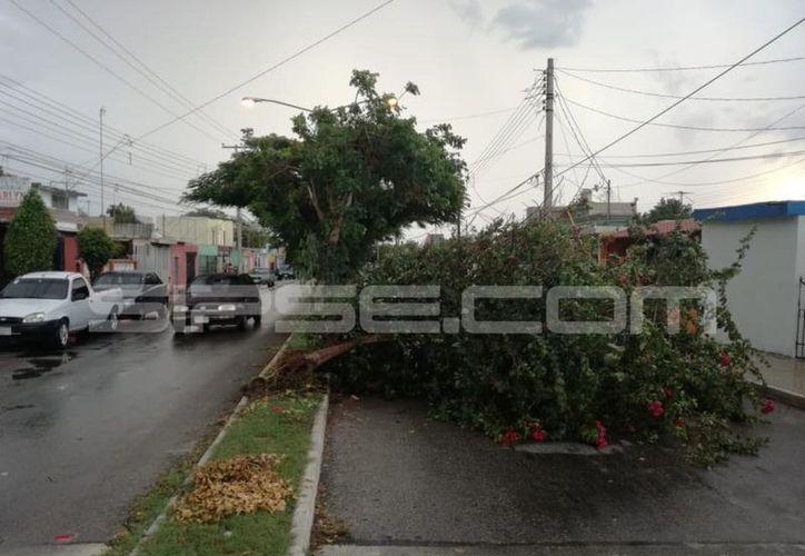 La jornada vespertina se vio interrumpida por la caída de hasta 25 mm de lluvia, especialmente en la zona poniente de la ciudad. (Milenio Novedades)
