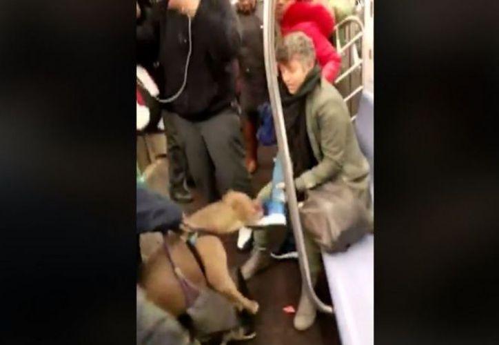 Después de ser atacada por el perro la mujer también fue atacada por el dueño del canino, le aventó un zapato. (Foto: ABC News).