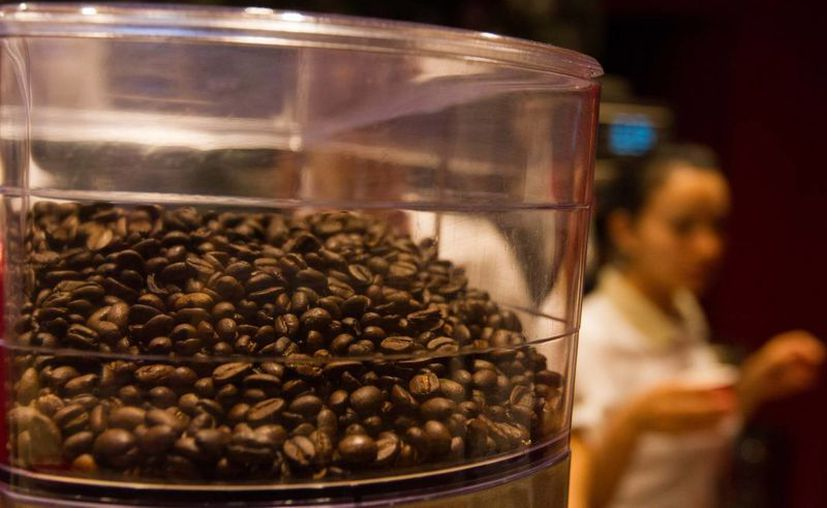 La industria cafetalera contará con un presupuesto federal de 700 millones de pesos en 2014, recursos que se aplicarán bajo nuevas políticas. (Archivo/Notimex)