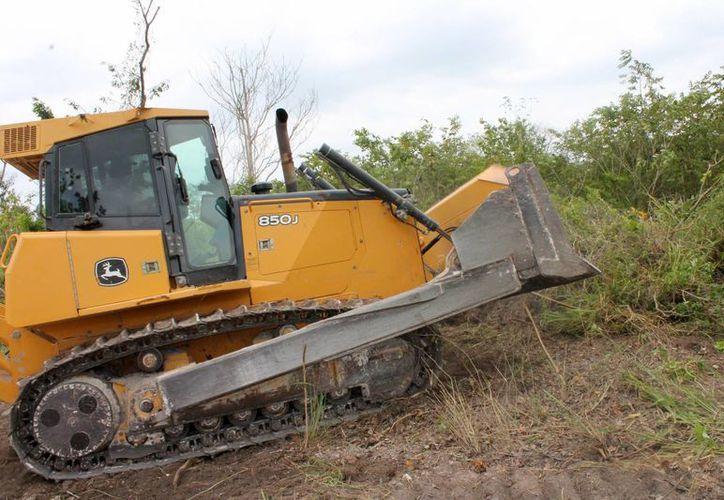 Cuándo se hace el cambio de uso de suelo, principalmente por terrenos de uso forestal, el estado a través de la Semarnat tiene una compensación. (Archivo/SIPSE)