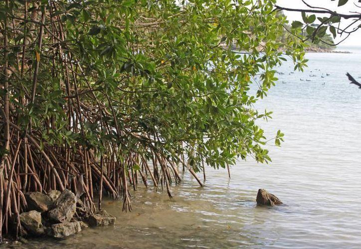 Las recomendaciones han sido emitidas por la Procuraduría Federal de Protección al Ambiente (Profepa). (SIPSE)
