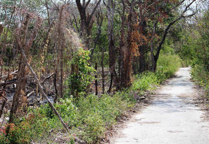 El fraccionamiento San Jocesito se ubicaría a 20 kilómetros de Playa del Carmen, entre Xpu-Ha y Puerto Aventuras. (Octavio Martínez/SIPSE)