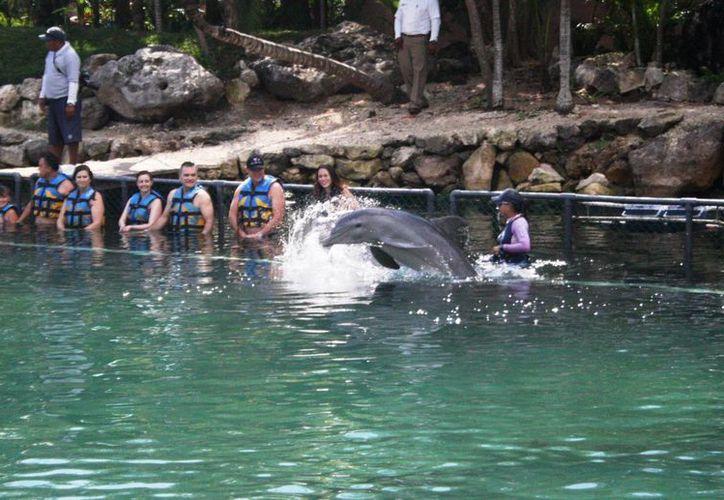 Los delfinarios se excluyeron de la Ley de Protección y Bienestar Animal. (Adrián Barreto/SIPSE)