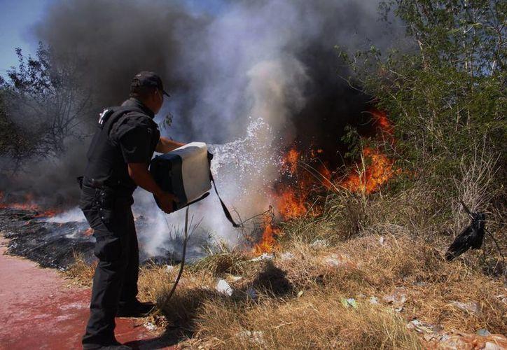 El acumulado de la temporada de quemas arroja 243 siniestros superficiales que afectaron mil 296 hectáreas. (SIPSE)