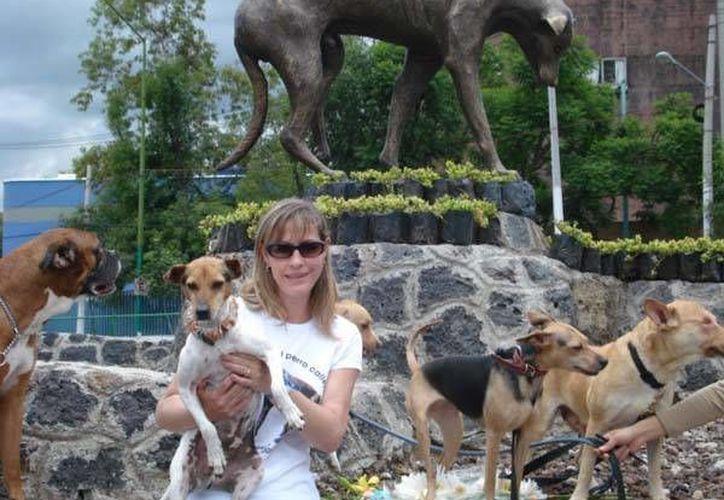 El Día del Perro Callejero está inspirado en un perro sordo llamado Pelusa, que casi toda su vida fue callejero hasta que lo auxiliaron. (milagroscaninos.org)