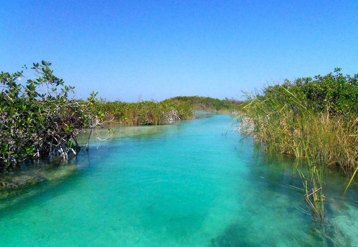 Las reservas de la biosfera Sian Ka'an en Quintana Roo son protegidas. (Redacción/SIPSE)
