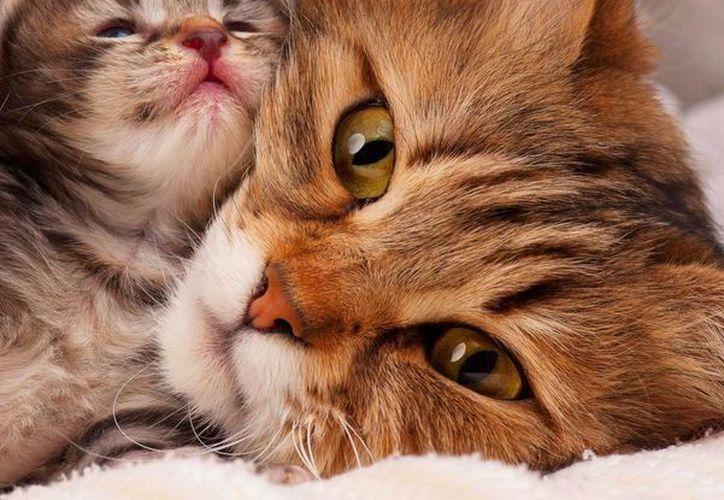 La reacción de la gata al enterarse que estaba esperando cachorros ha circulado por todo el mundo. (Foto: Contexto)