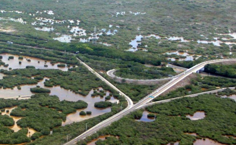 Yucatán cuenta con una reserva de agua importante así como una amplia diversidad de flora y fauna. (Milenio Novedades)