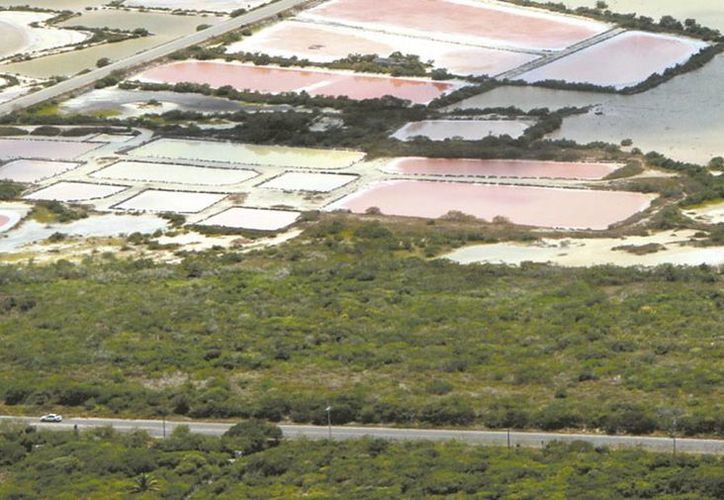 De acuerdo con la Seduma, una de las formas de evitar la erosión de playas es sembrar vegetación de la región. El Gobierno invierte un millón de pesos para sacar arena de mar y rellenar las zonas más 'desgastadas'. (Milenio Novedades)