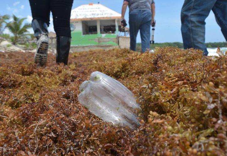 El programa de limpieza de playas se desarrollará el próximo 23 de septiembre. (Gustavo Villegas/SIPSE)