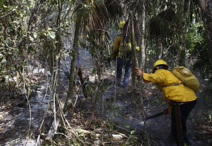 A dos kilómetros del Aeropuerto se han afectado 190 hectáreas. (Israel Leal/SIPSE)