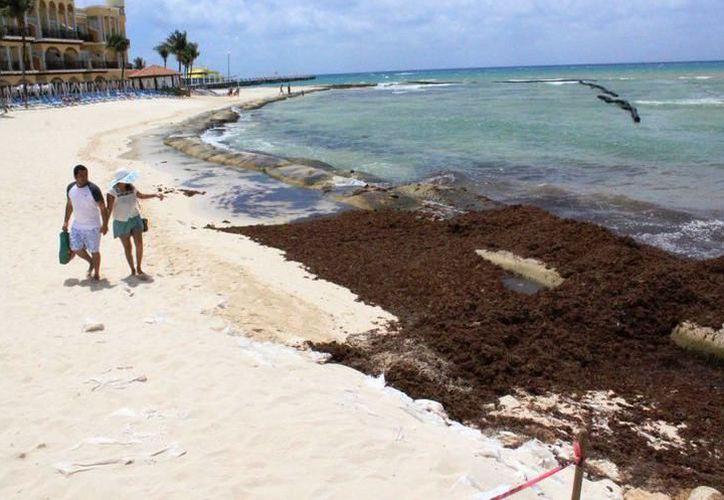 Quintana Roo conformó un comité técnico y científico integrado por investigadores de instituciones y dependencias para dar solución al probelma de sargazo. (SIPSE)